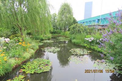 久し振りに睡蓮の庭を訪問する