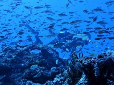夏!沖縄 波照間島「イコリッチ」でダイビング