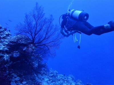 夏!沖縄 波照間島「カスミの根」でダイビング