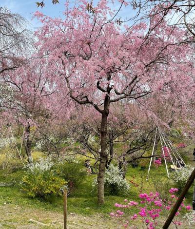 2021年 るなさんと行く春爛漫の奈良&京都【4】神社にお寺にカフェ巡り♪京都を駆け巡た1日