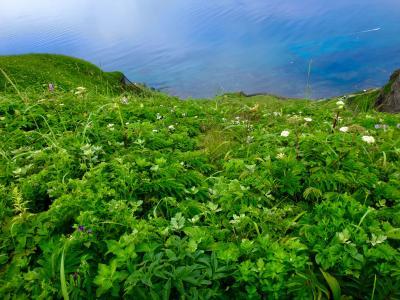 花々の島、降り注ぐ星々