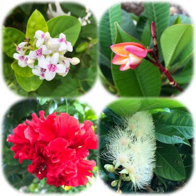 島の海と花とフルーツ(1)