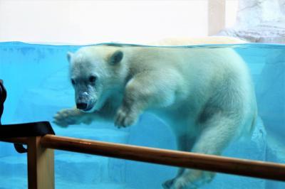 男鹿水族館GAO はじめまして、フブキ君!! ユキちゃんのお母さん姿が見れてとれも嬉しいです、ありがとう!!