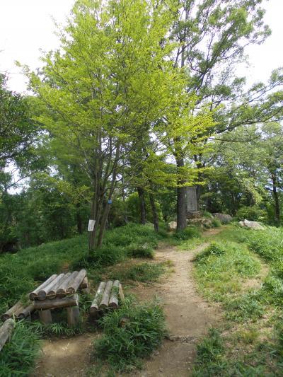茨木市北部の鉢伏山