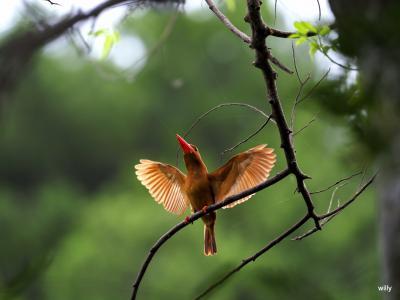 梅雨明けの沖縄へ鳥に会いに  鳥編