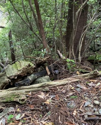 屋久島だけ晴れまくりの4日間 (2) - 縄文杉トレッキング
