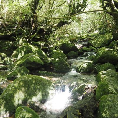 屋久島だけ晴れまくりの4日間 (3) - もののけ姫の舞台となった白谷雲水狭へ