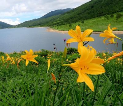 団塊夫婦の花巡りドライブ・2021夏ー(1)ニッコウキスゲを見に秘境の野反湖へ