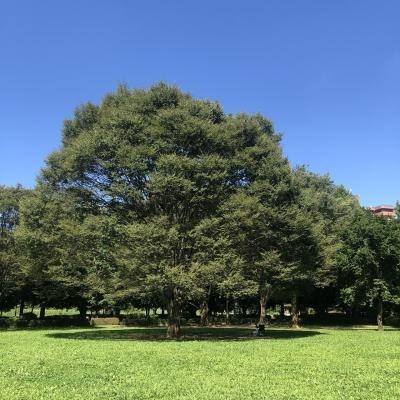 2021/7月 川口自然公園 木陰でピクニック