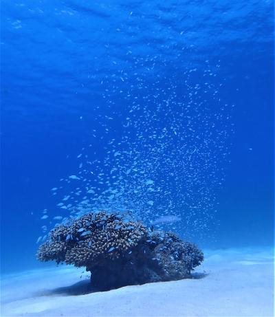 夏!沖縄 渡嘉敷島「ハナリ」でダイビングをしました。