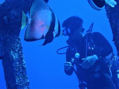 夏!沖縄 渡嘉敷島「海人」でダイビングをしました。