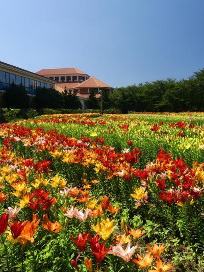 「深谷グリーンパーク」のユリ_2021_3部咲きくらいですが、とても綺麗です(埼玉県・深谷市)