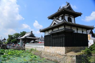 安城の歴史あるお寺に咲く清楚な白いハスとマルシェ♪&白いハスは西山公園にも♪