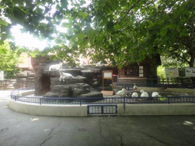 さみしい動物公園