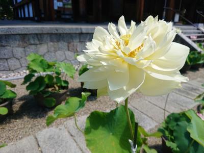JWマリオットホテル奈良に宿泊してロータスロード