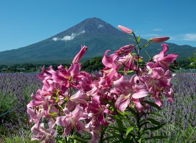 夏の花いっぱいの湖畔 ~河口湖大石公園~