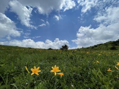 ニッコウキスゲの咲く野反湖へ、ようやく乗れたYAMBAダックツアー