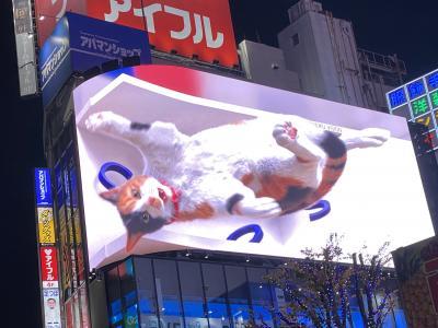 新宿に巨大猫が出没してるらしい!!それは見に行かにゃ 猫を探して新宿へ