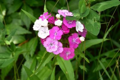季節の花が咲き誇る陽殖園2021~自然を再現する武市さんの花園~(北海道滝上町)
