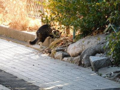 猫と寺社探し【茨城(笠間稲荷・Kasama Inari)編󠄃】