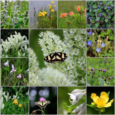 ◆初夏の羽鳥湖高原~花水紀行 (羽鳥湖高原や湿地の花々)編