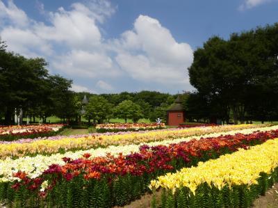 「深谷グリーンパーク」のユリ_2021(2)_見頃ピーク過ぎて、一部散り始め(埼玉県・深谷市)