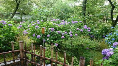 梅雨の京都・1
