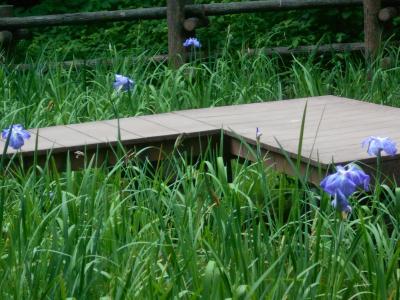 四季の森公園の花々