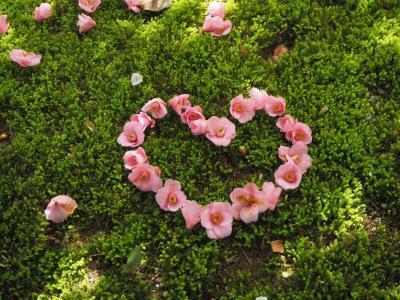 2021年 るなさんと行く春爛漫の奈良&京都【5】桜と椿の欲張り散歩~インクラインから哲学の道周辺~