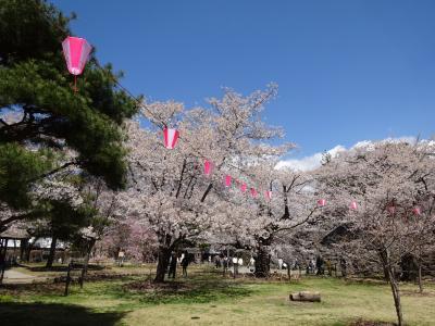 小海沿線の桜と保存SL