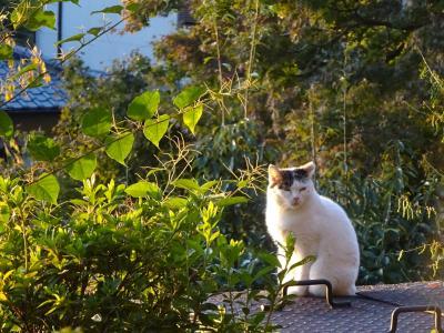 2020年10月 哲学の道で猫まみれ (名古屋・高山・京都巡り旅 その十六)