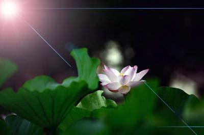 古代の夢とロマンを感じさせてくれる蓮「花はす公園」