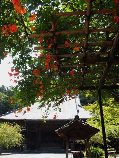 葉月の花咲く鎌倉