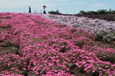観光農園花ひろば、羽豆神社♪&水軍伝説の風薫る宿 花の丸に泊まる♪