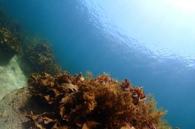 越前水中撮影