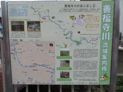 心の安らぎ散歩(2021年7月 自宅から善福寺川を歩いてみるPart2 カワセミが居たよ!)
