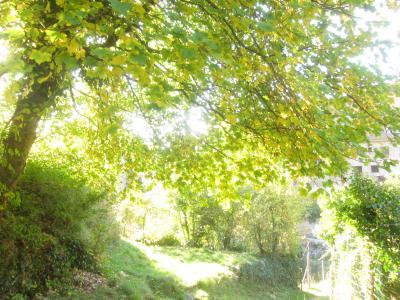 南仏ニース裏庭の小村を路線バスで巡る旅。すみれ咲くエズ リュセラム レスカレーヌ紀行