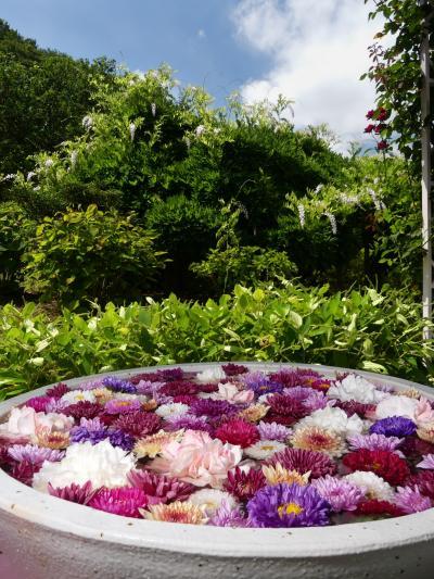 「あしかがフラワーパーク」の花手水_2021_全7鉢展示中、8月29日までです(栃木県・足利市)