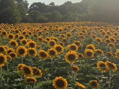 長居公園 ひまわりウィークで大阪の夏を満喫♫