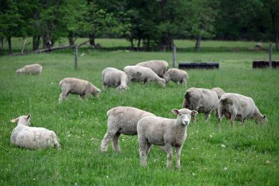 羊牧場に泊まってペーターの気分