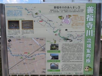 心の安らぎ散歩(2021年7月 自宅から善福寺川を歩いてみるPart3 鴨の親子が居たよ♪)