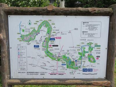 心の安らぎ散歩(2021年7月 自宅から善福寺川を歩いてみるPart4 カミキリムシに遭遇したよ♪)