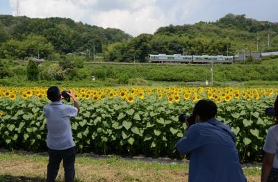 奈良県でヒマワリを楽しむ