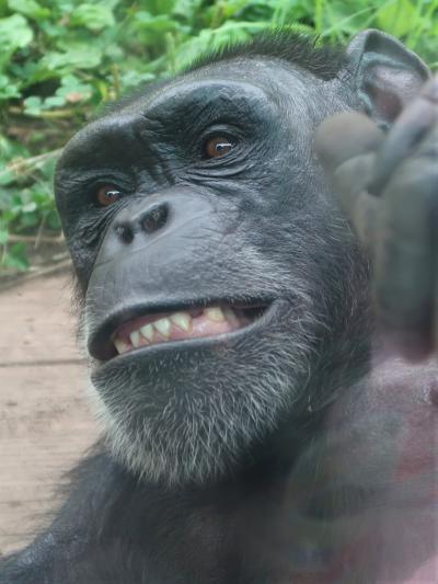鹿児島25 平川動物公園-2 世界のサル類・南米の自然 ☆オランウータン/ニホンザル・ラマ