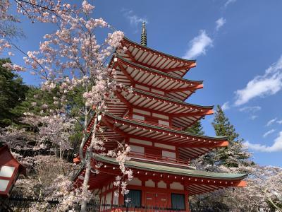 箱根から桜咲く新倉山浅間公園へ
