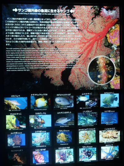 鹿児島29 かごしま水族館-1 黒潮大水槽・南西諸島の海 ☆ジンベイザメ・サンゴ礁の魚