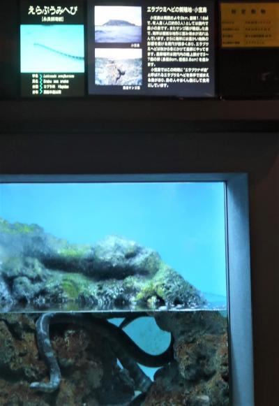 鹿児島30 かごしま水族館-2 錦江湾/近海・多様な生き物 ☆えらぶうみへび・えびすだい
