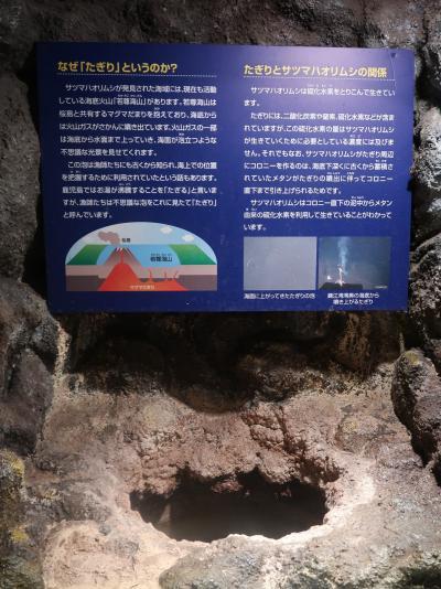 鹿児島31 かごしま水族館-3《深海》生態系の神秘 ☆リュウグウノツカイ・さつまはおりむし