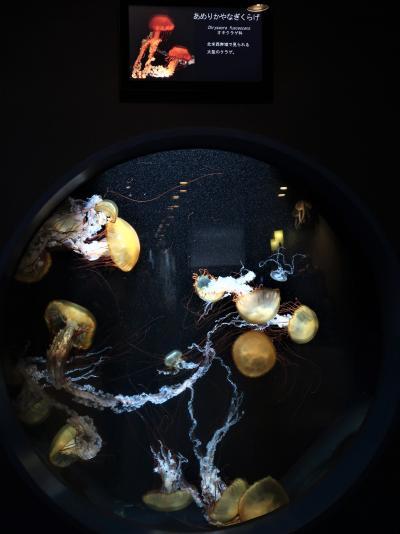 鹿児島32 かごしま水族館-4 アマゾン大水槽・沈黙の海 ☆クラゲ・大ウナギ・淡水魚類