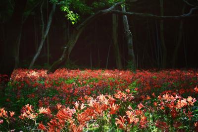 真夏のドラキュラ城☆オレンジのカーペット